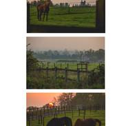 1 - Horse fifield.jpeg