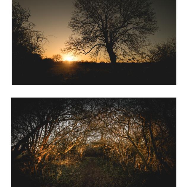 5 - oakley green sunrise.jpeg