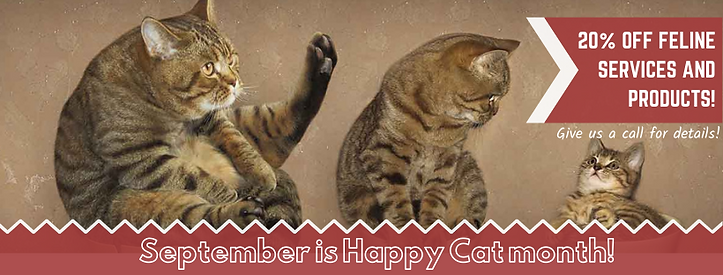 September is Happy Cat month!.png