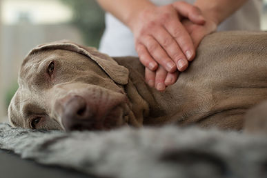 canine-massage-therapy.jpg