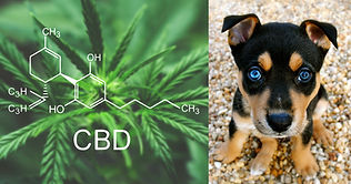 myths-about-cbd-hemp-and-dogs.jpg