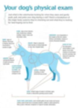 Physical Exam Canine.jpg