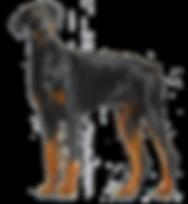 Doberman Dog.png