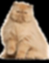 Persian Cat.png