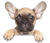 french bulldog contact form butler creek animal hospital kennesaw acworth ga