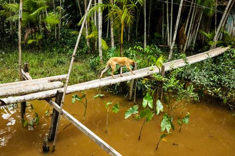 INVISIBLE AMAZON - WILLIAM BAGLIONE (12)
