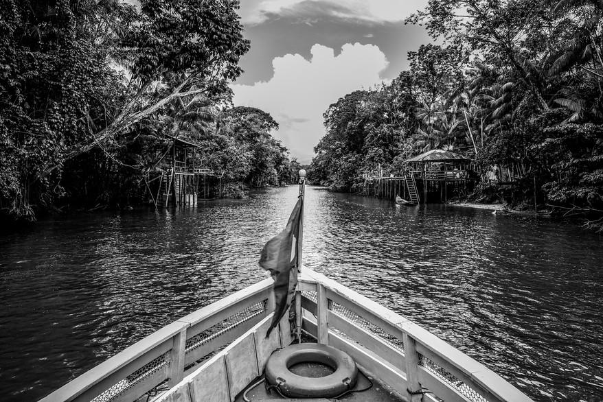 INVISIBLE AMAZON - WILLIAM BAGLIONE (20)