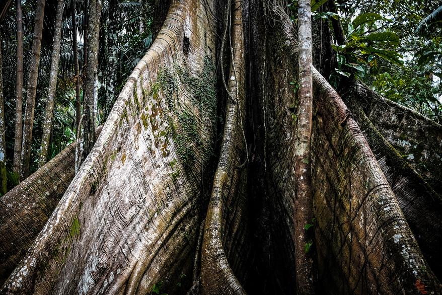INVISIBLE AMAZON - WILLIAM BAGLIONE (14)