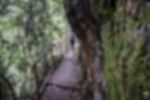 Kondalilla Falls,
