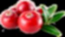cranberries_png_338792-2.png
