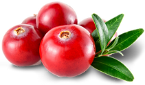 cranberries_png_338792-2.png