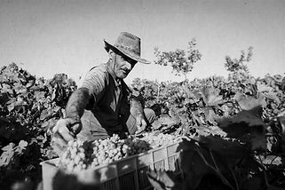 farmer(vintagetexture).jpg
