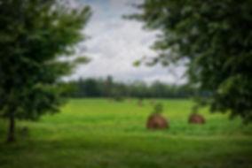 Haystack Field.jpg