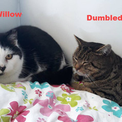Willow and Dumbledore
