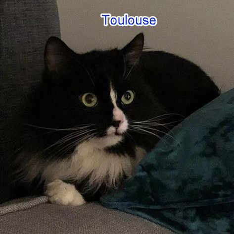 Toulouse1.jpg