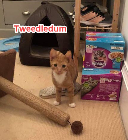 Tweedledum6.jpg