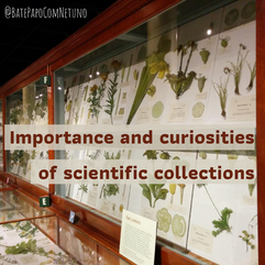 Importance and curiosities of scientific collections