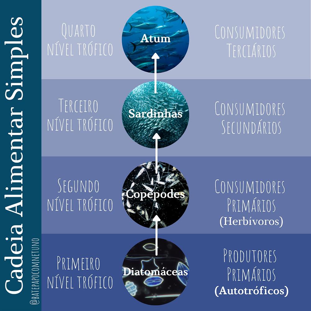 Ilustração de uma cadeia alimentar simples. De baixo para cima temos o primeiro nível trófico representado pelas diatomáceas, o segundo pelo copépodes, o terceiro pelas sardinhas e o quarto pelos atuns.