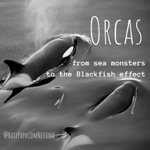Orcas: from sea monsters to the Blackfish effect