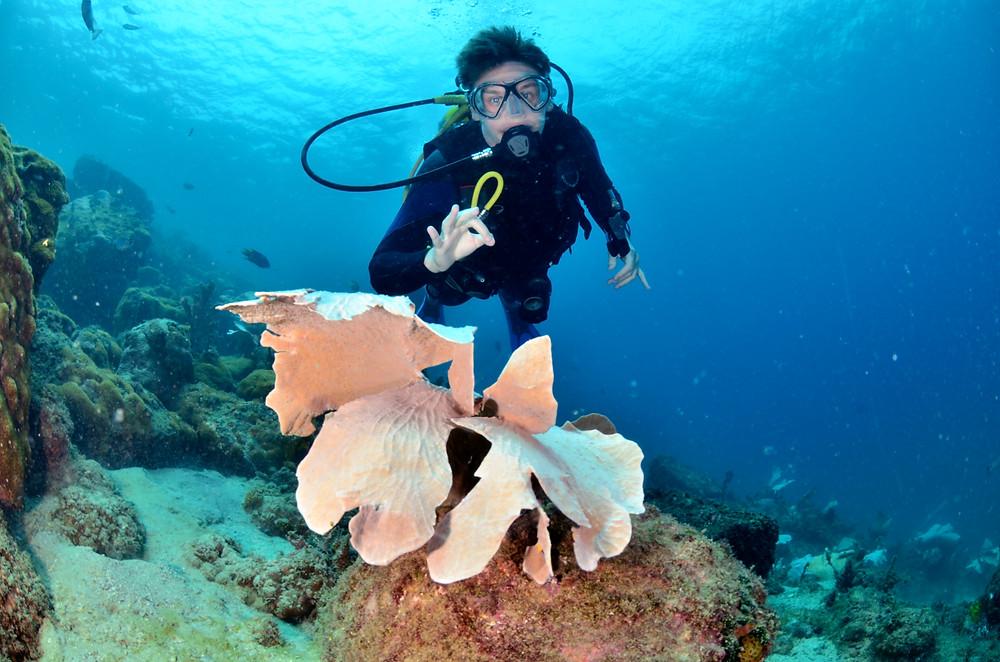 Fotografia subaquática do autor do texto, Daniel Martignago, mergulhando em um recife de coral. Daniel está usando máscara de mergulho, roupa de neoprene e equipamento SCUBA. No primeiro plano da foto, centralizado, está uma gorgônia de cor rosa.
