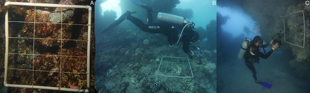 na foto da esquerda há um fotoquadrado posicionado sobre o recife. Na foto da direita há um mergulhador tirando uma foto do fotoquadrado.