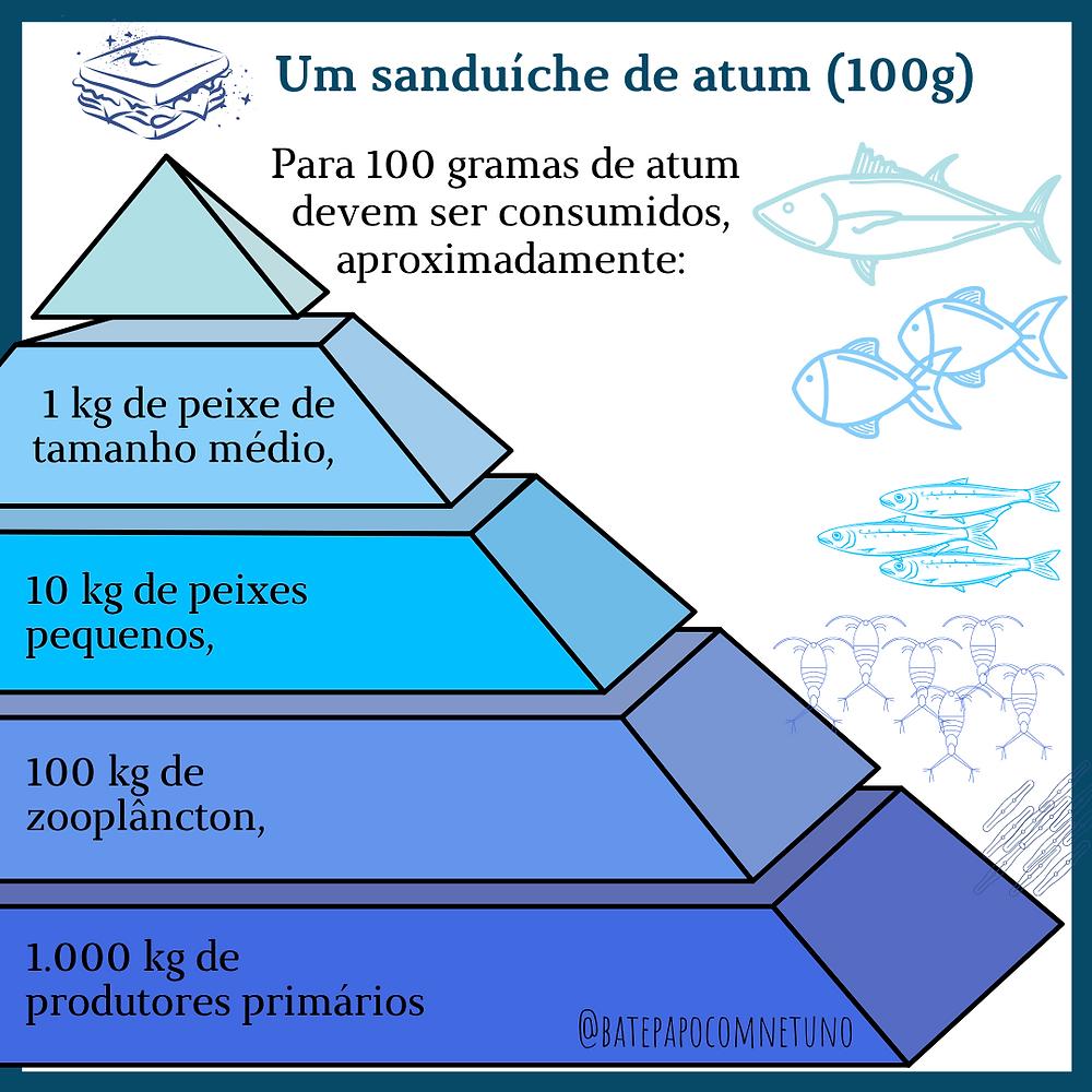ilustração de uma pirâmide com diferentes camadas. Na primeira camada mais abaixo, temos 1000 quilos de produtores primários, na camada acima 100 quilos de zooplâncton, na próxima 10 quilos de peixes pequenos, na próxima 1 quilo de peixe tamanho médio e por fim, no topo da pirâmide, um sanduiche de atum com 100 gramas do mesmo