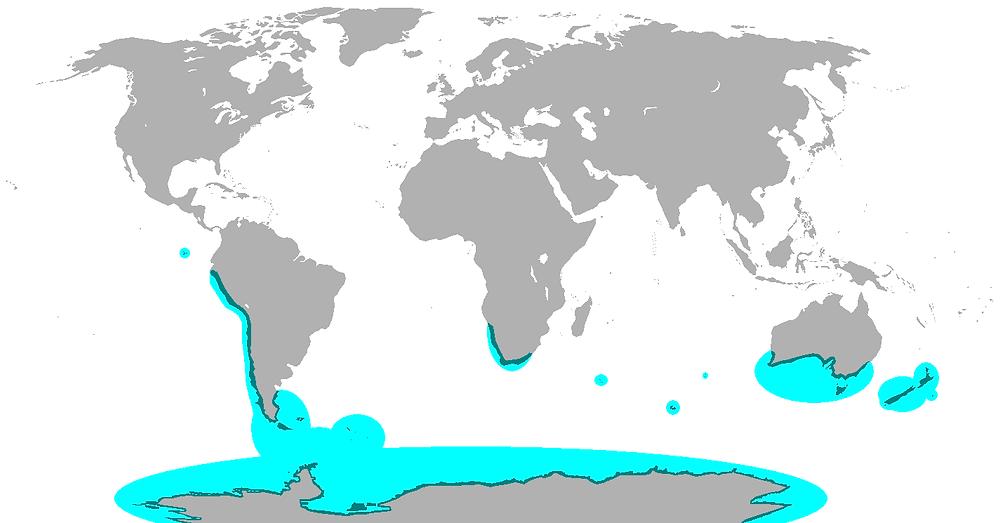 Mapa mundo com os continentes em cinza. Em outra cor são contornadas asa regiõe (continentes e ilhas) no hemisfério sul onde são encontrados pinguins.
