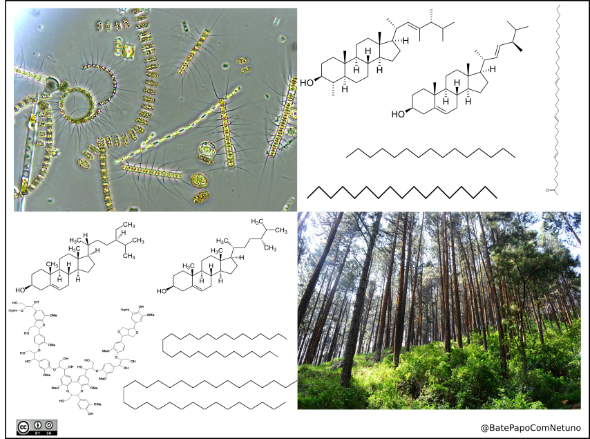 Exemplificacao de moleculas e organismos que compoem a materia organica de fontes terrestres (ex. plantas) e marinhas (ex.algas).