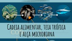 Quem come quem? Descomplicando a teia trófica marinha e a alça microbiana