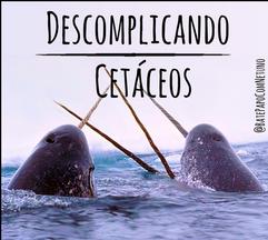 Baleias ou golfinhos?