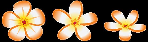 Frangipani-White-and-Orange.png