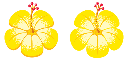 Hibiscus-Yellow.png