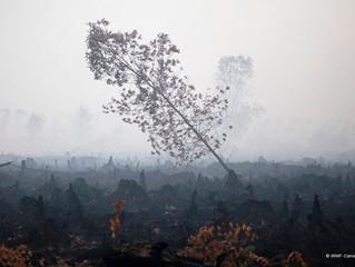 Dampak Buruk Kebakaran Hutan