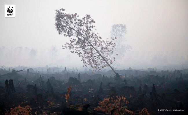 Kebakaran Hutan / Lahan di Indonesia