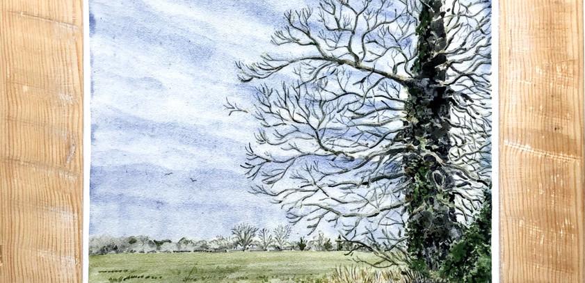 Winter Field south norfolk