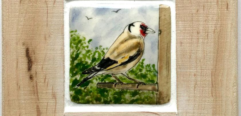 Goldfinch tile 5cm
