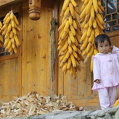 reis door Guizhou september 2010 435.jpg