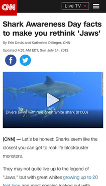 Shark Awareness Day facts to make you rethink 'Jaws'