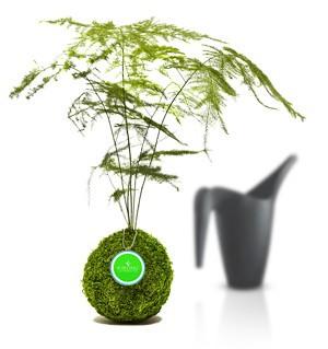 Baum 3.jpg