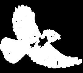 bird 7.png