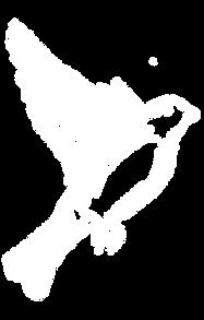 bird 6.png