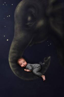 newborn photography limerick posie