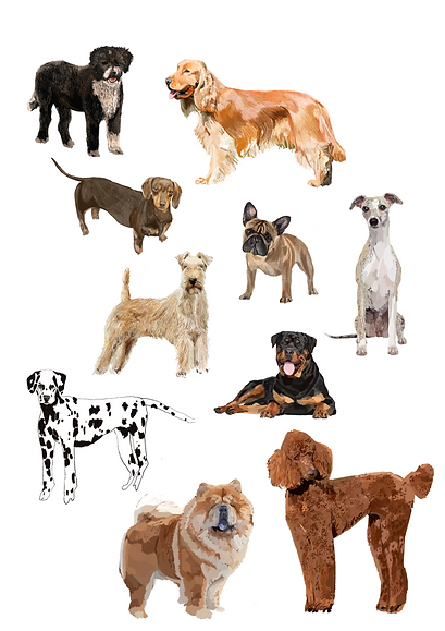 Mixed dogs .png