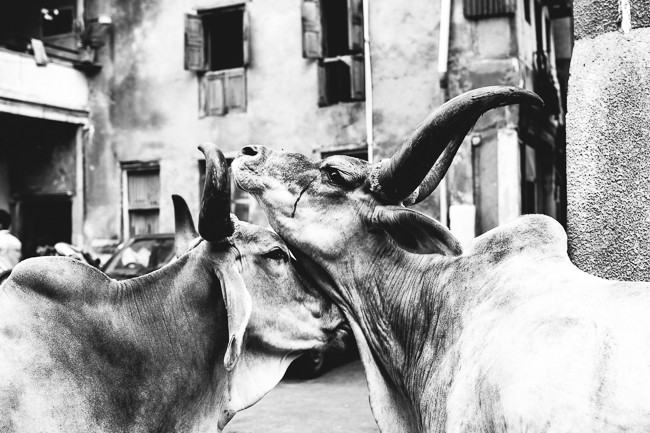 201409_Ahmedabad-9
