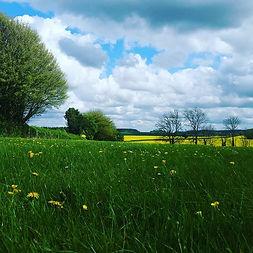 summer in the UK. _#spring_#summertime _#hampshirecountryside _#massagetherapywinchester.j