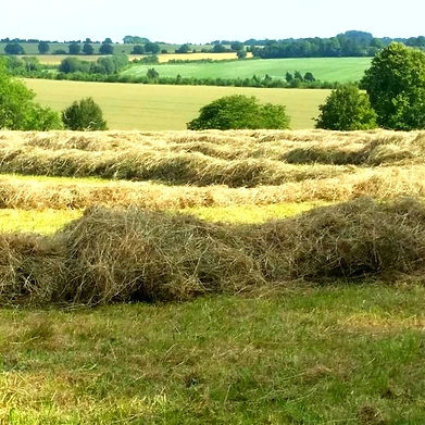 Hay ready for baling with views over the