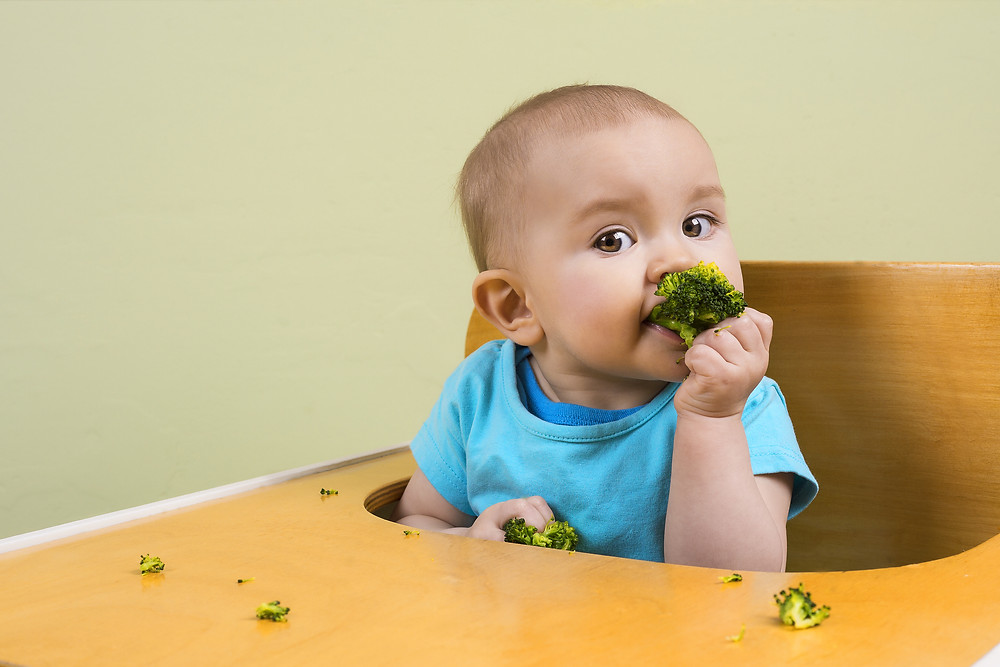 small baby led weaning baby eating broccoli