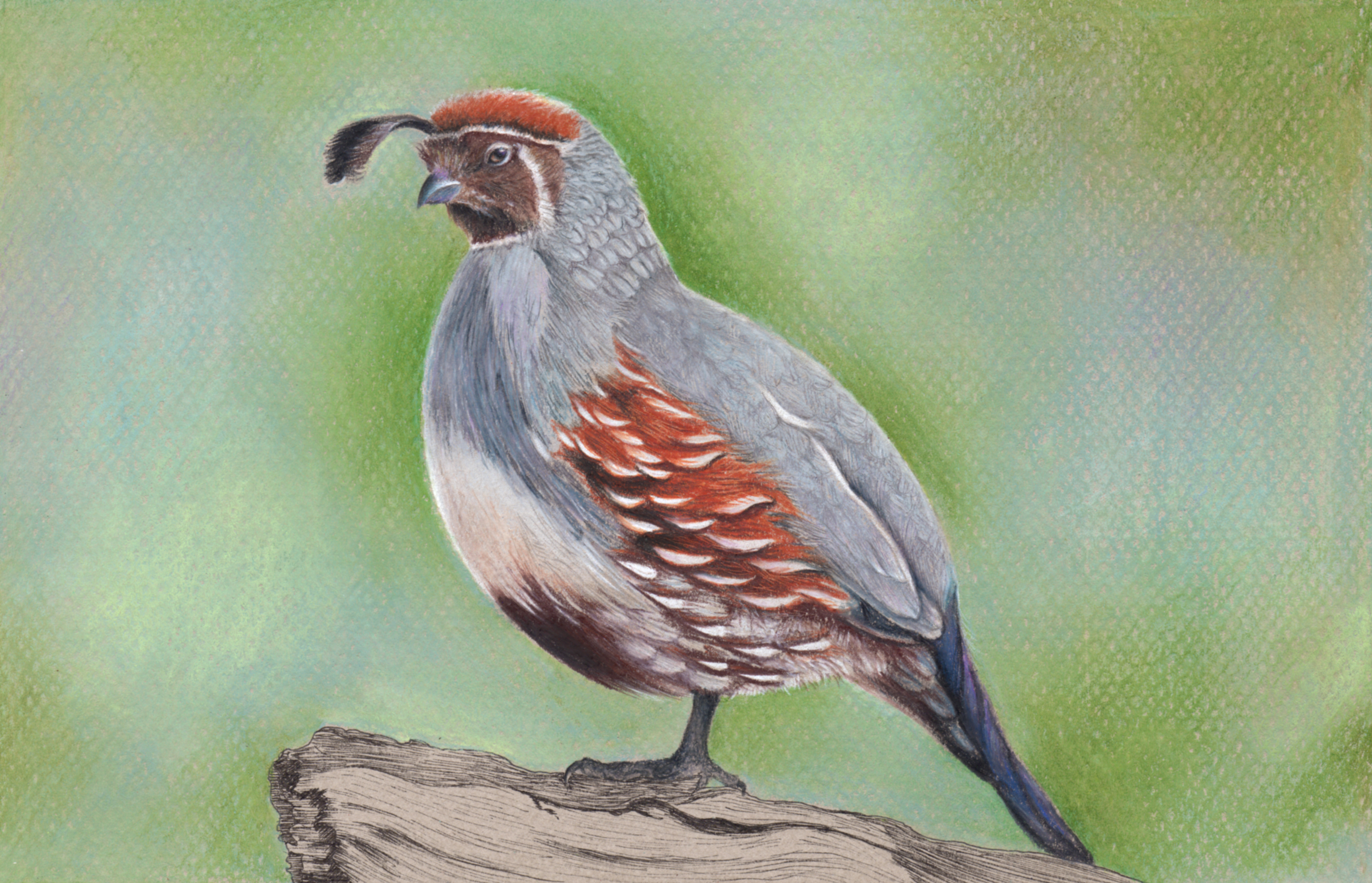 Quail Mother's Day Card