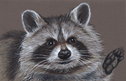 Raccoon Wedding Card