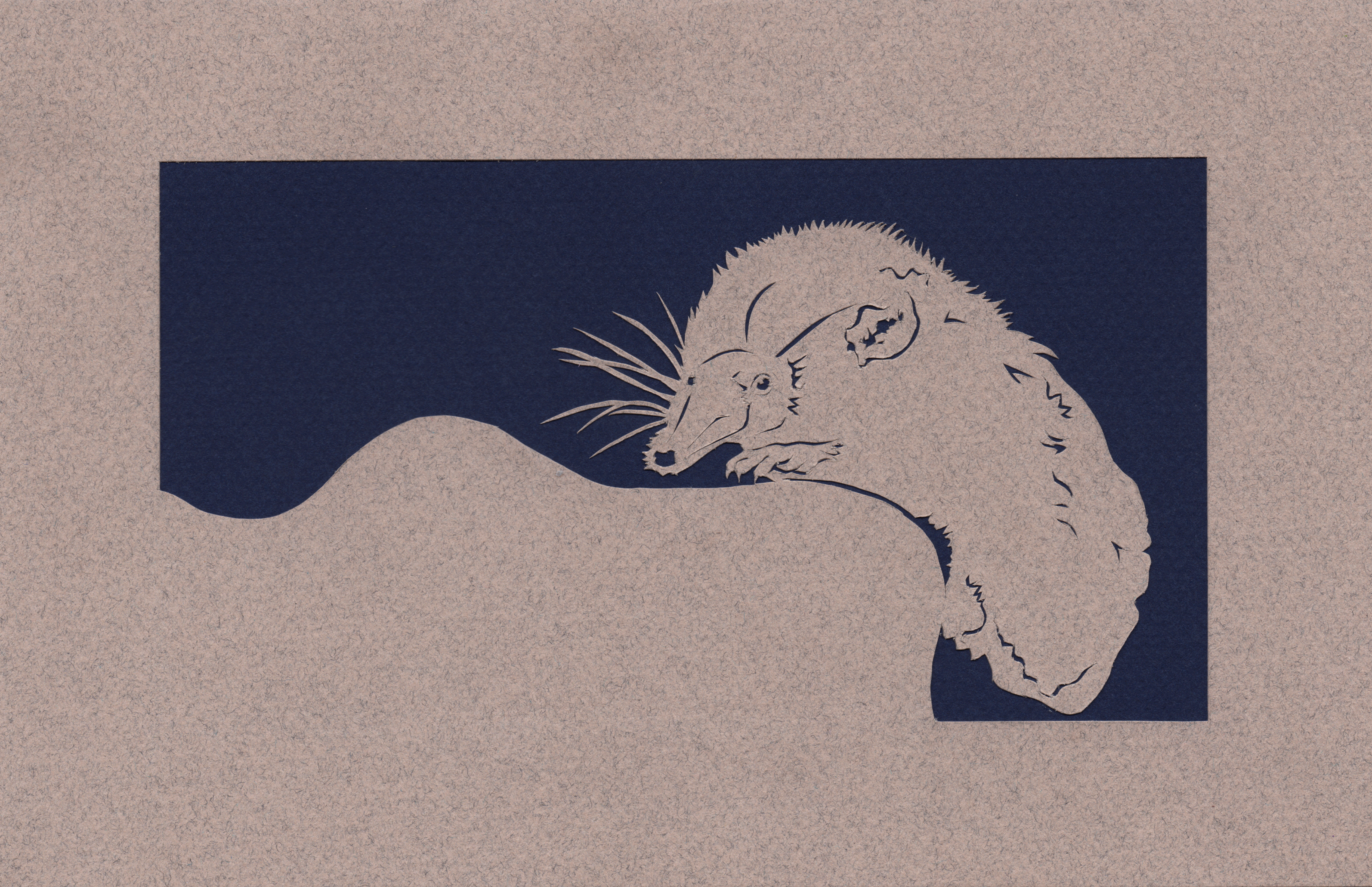 Pygmy Shrew Father's Day Card